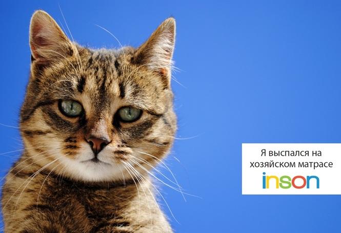 veterinary advice cat vomiting